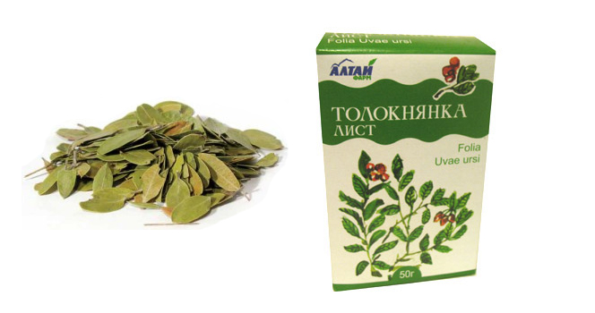 листья толокнянки при цистите